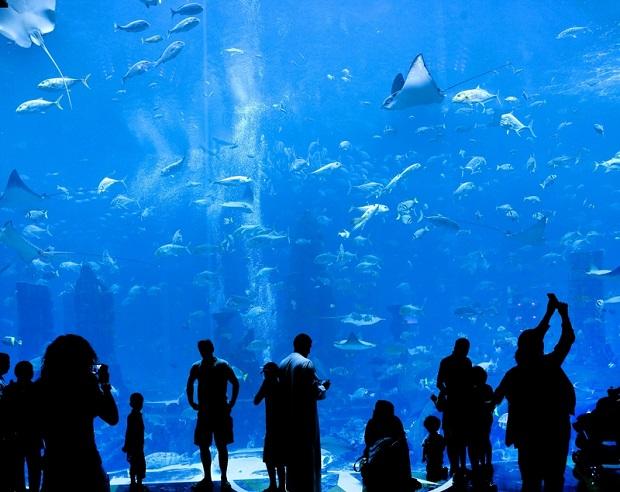 Dubai-Mall-Aquarium