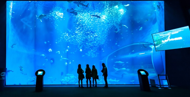 Aquarium des Atlantis Hotels in Dubai