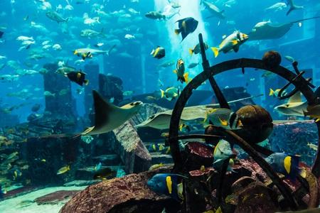 Leck im Aquarium der Dubai Mall