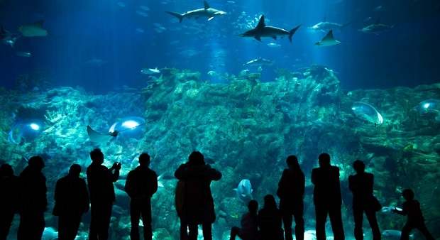 Riss im Dubai Mall Aquarium ist repariert