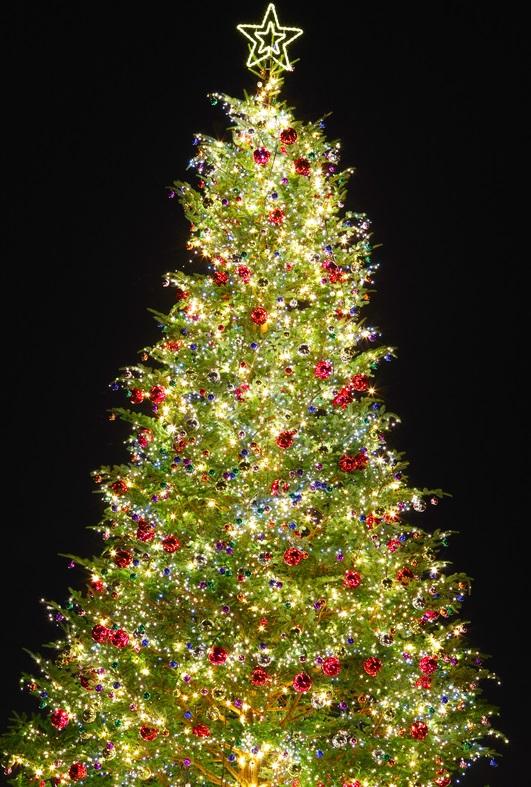 Weihnachtsbaum in Abu Dhabi